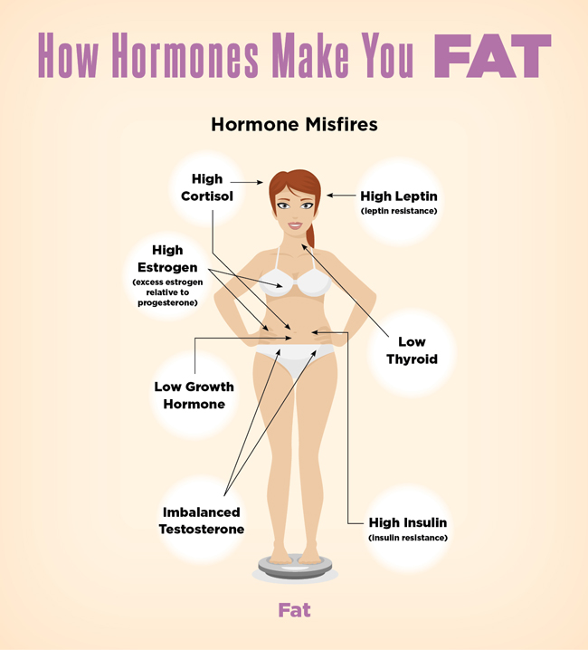 diagram-how-hormones-make-you-fat